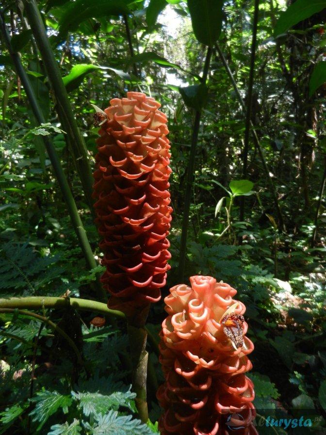 Bezbronne homo sapiens w dżungli