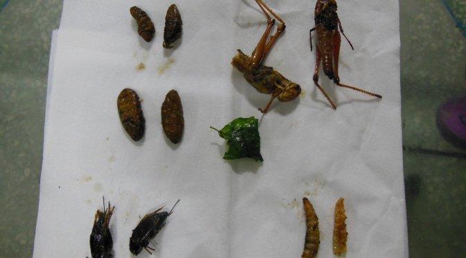 Jak smakują robaki w Tajlandii